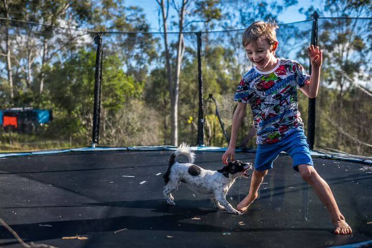 Little boy playing with dog on the trampoline.